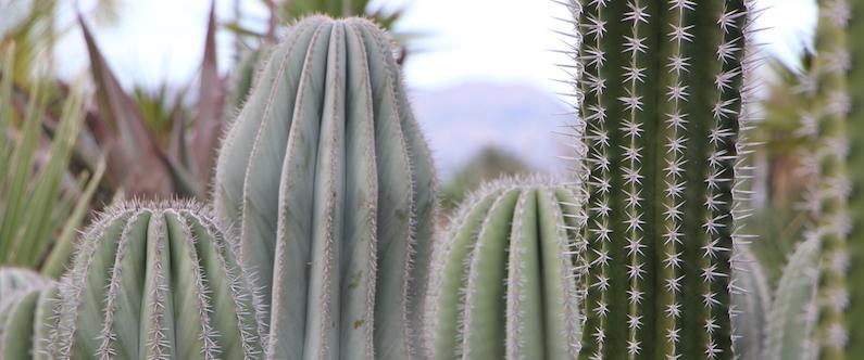Cactus columnares comprar online jardin postal