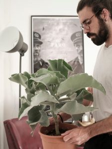 Kalanchoe beharensis (oreja de elefante) Comprar online suculentas cactus Jardín Postal vivero Cuidados y características