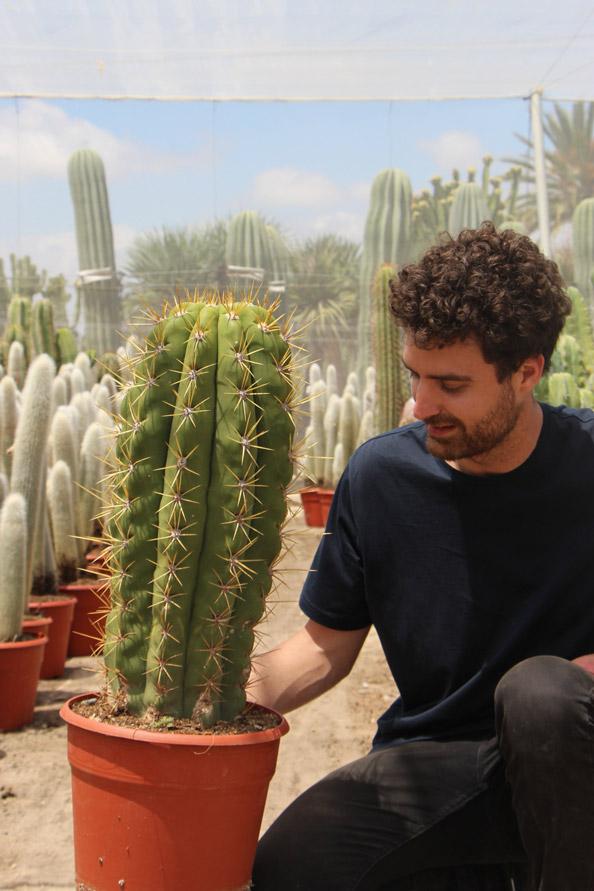 comprar online Trichocereus pasacana Jardin Postal cactus suculentas