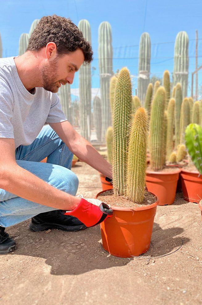 comprar epostoa guentheri Vatricania guentheri jardín postal