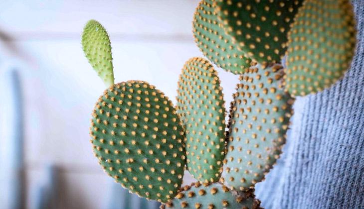 cuanto regar los cactus