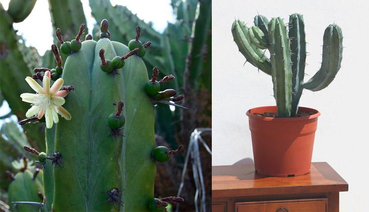 cactus bonito para regalar