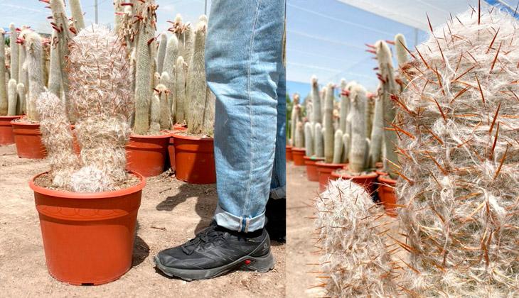 regalar plantas originales