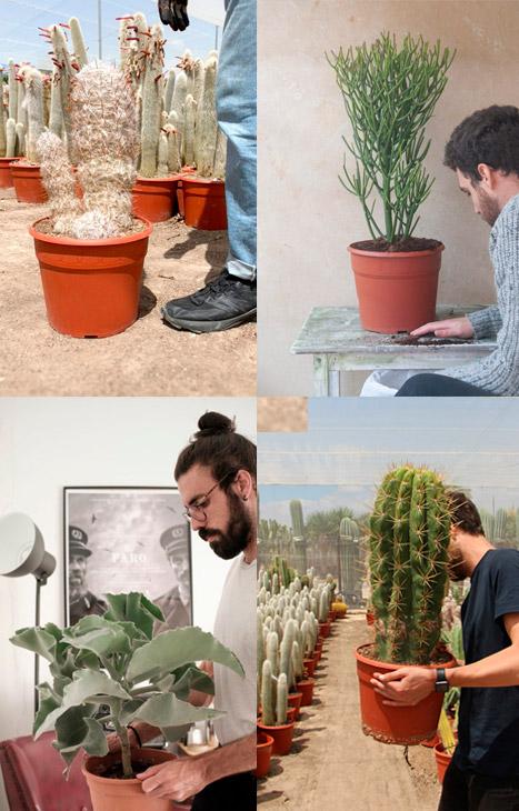plantas de exterior como obsequio