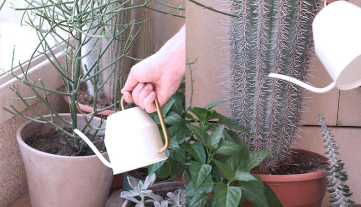riego de cactus en invierno