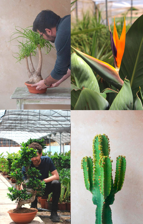 regalar plantas de interior