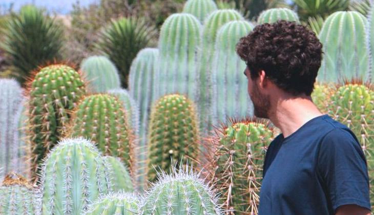 cactus grandes en viveros